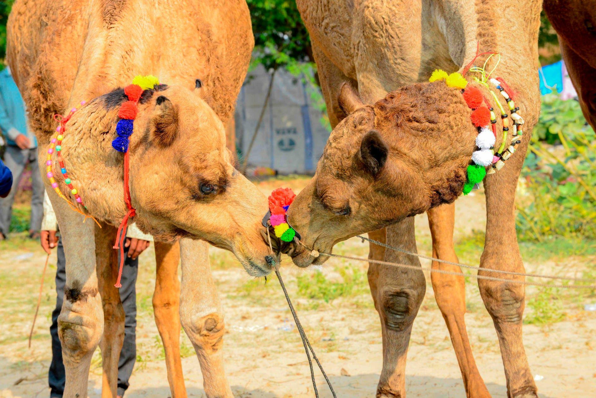 برترین تصاویر خبری ۲۴ ساعت گذشته/ 22 آبان