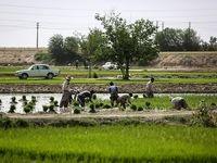 خودکشی دستهجمعی کشاورزی در