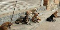 هشدار پلیس به حیوان آزاران!