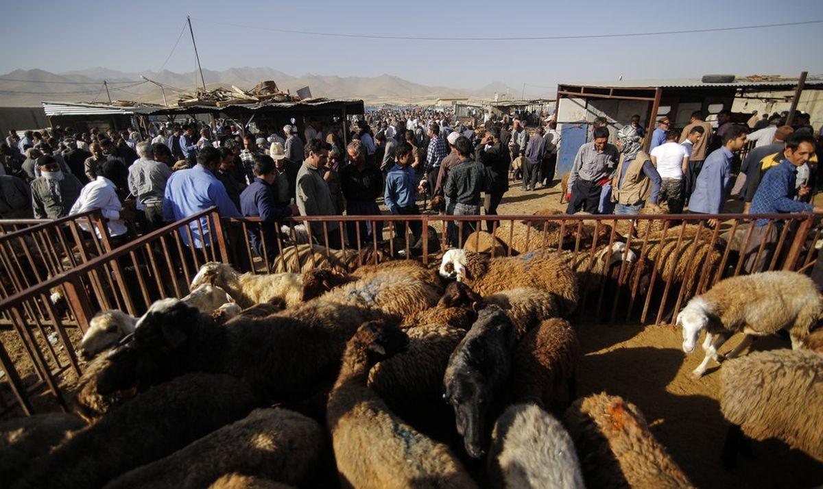 فاصله عمیق قیمت پایه دام تا گوشت به ضرر مصرف کننده است