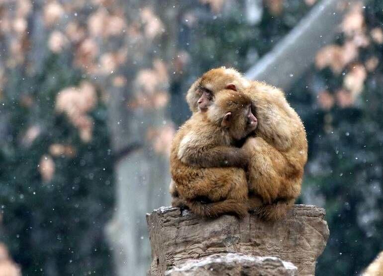 حیوانات در زمستان چطور گرم میشوند؟