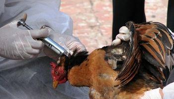 حجتی: مشکل جدی در آنفلوانزای پرندگان نداریم