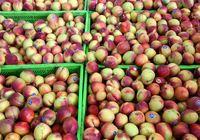 قیمت میوه یکساله ۶۷درصد جهش کرد