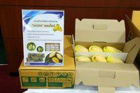 سه نوآوری تایلند در صنعت بستهبندی/ حفظ تازگی و بوی مطبوع قهوه با استفاده از جعبههای اوزون