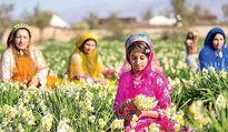 مانع اصلی گردشگری کشاورزی چیست؟