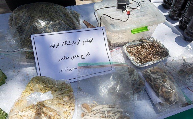 (عکس) جزئیات کشف یک نوع قارچ سمی و مخدر مرگبار در کشور