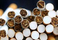 نیکوتین موجود در سیگارها بررسی میشود