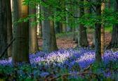 جنگل آبی +تصاویر