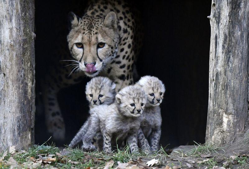 تصاویر منتخب حیات وحش در سال 2018