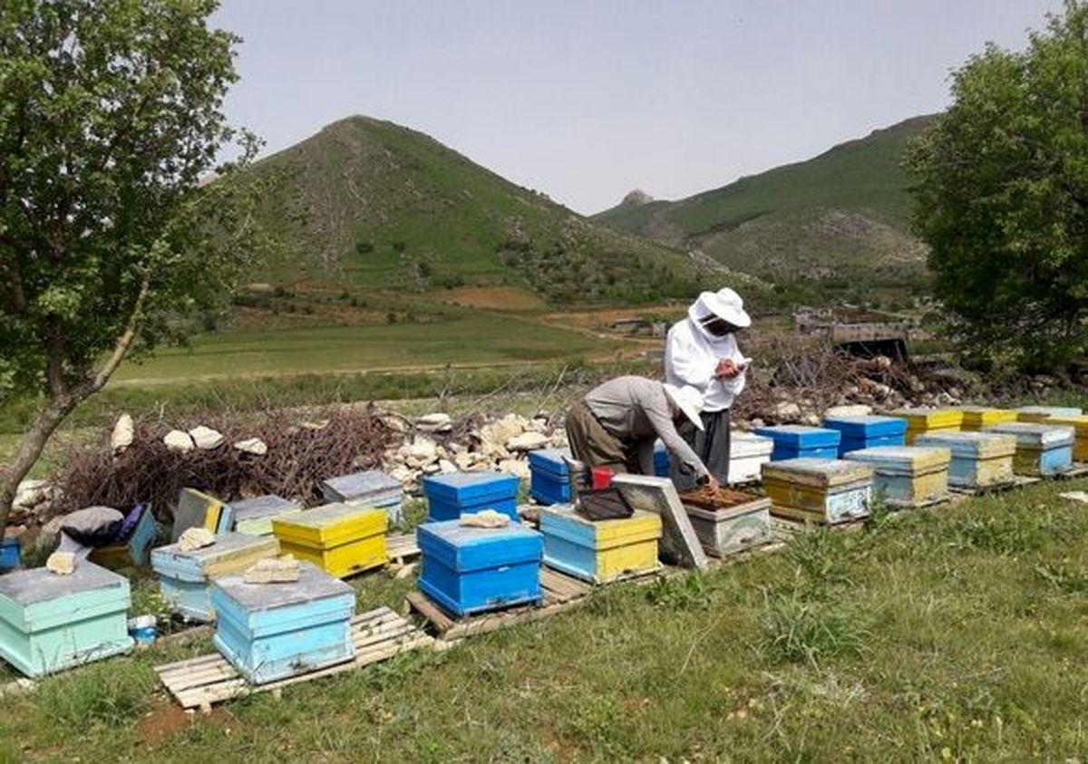 زنبورداران از اخذ «کد شناسه یکتا» مستثنی می شوند