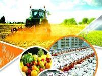 جزئیات تورم در مرغداریها و محصولات کشاورزی