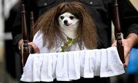 رژه جالب سگهای هالووین در نیویورک +تصاویر