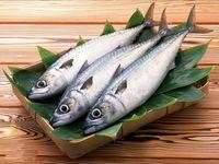 چرا ایرانیها با ماهی قهرند؟
