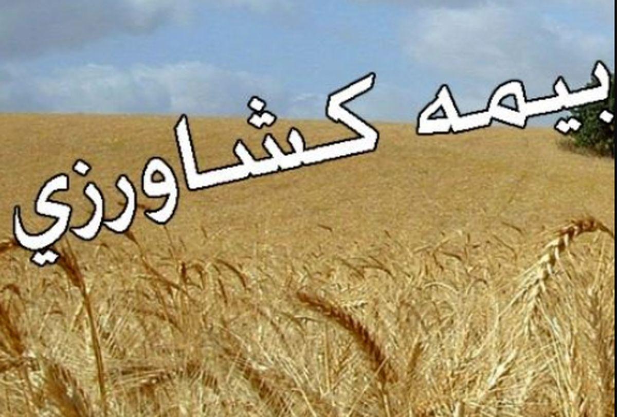 عملکرد صندوق بیمه کشاورزی زیر ذره بین فعالان و کارشناسان کشاورزی