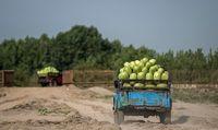 خروج ۲۲۰میلیارد لیتر آب با هندوانه از کشور