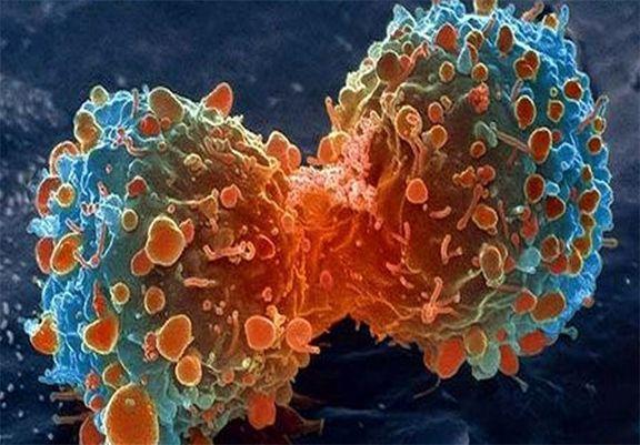 درمان سرطان با پیوند مدفوع