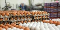 جزئیات دلایل گرانی تخم مرغ در بازار
