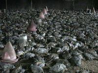آتش در سالن پرورش طیور، مرغها را کباب کرد