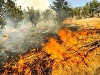 دوباره جنگل، دوباره آتش، دوباره نابودی