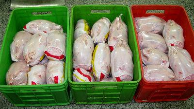 ۵۲ هزار تن؛ ذخیره مرغ منجد