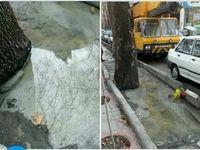 تعیین جرائم نقدی سنگین برای قطعکنندگان درختان