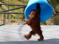 بهترین عکسهای دنیای حیوانات در سال2019