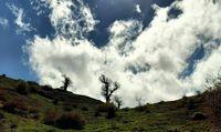 «جنگل اولنگ» تجربهای زیبا در دل شاهرود +تصاویر