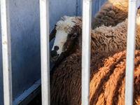 گوشت وارداتی کیلویی ۳۳ هزار تومان