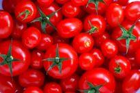 چرا گوجه فرنگی گران شد؟