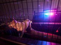 نجات حیوانات از آتش کالیفرنیا +تصاویر