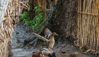 روشی برای شکار پرندگان در مازندران +تصاویر