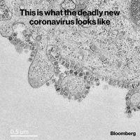 اولین تصویر منتشر شده از ویروس کشنده کرونا +عکس
