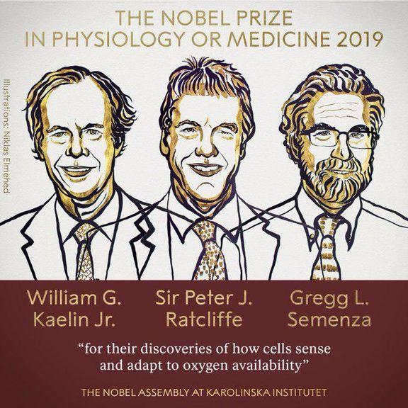 برندگان جایزه نوبل پزشکی۲۰۱۹ معرفی شدند
