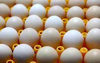 تخم مرغ کیلویی ۸۴۰۰تومان تمام میشود، ۶۲۰۰تومان میفروشیم