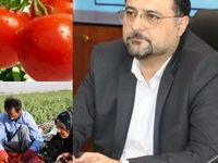 پرداخت بخش اول مطالبات گوجهفرنگی کاران
