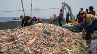 تایید رسمی ماهیگیری چینیها در آبهای عمیق ایران