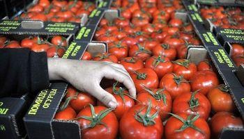 صادرات گوجه فرنگی ترکیه به 57کشور جهان
