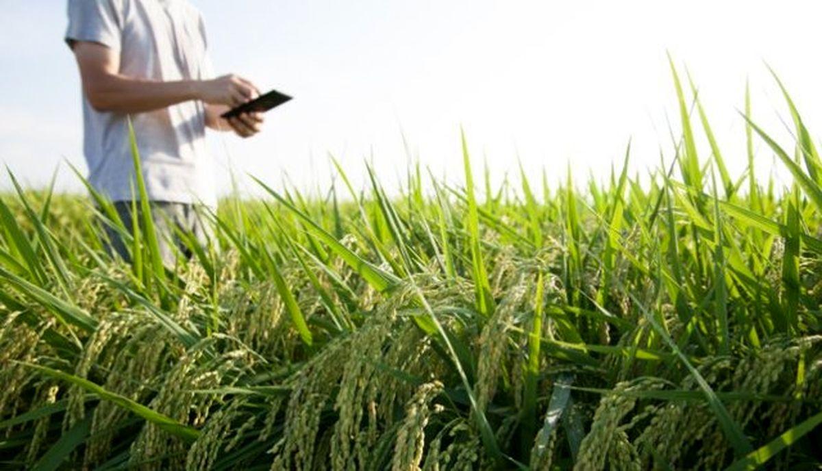 کشاورزی، قربانی صنایع آببر