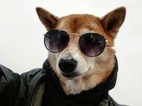 تصاویری جالب از سگی که مدلینگ است!