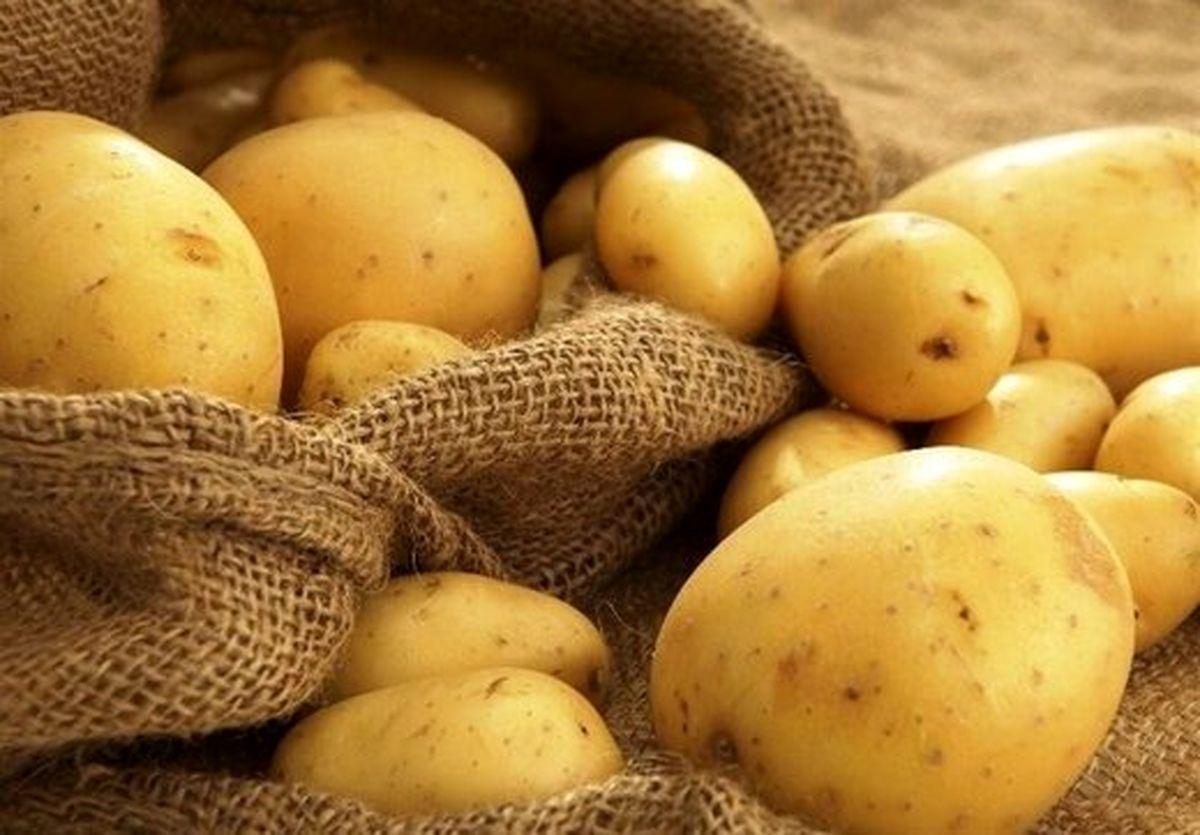 انباشت سیب زمینی محصول الگوی کشت وزارت کشاورزی