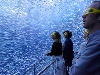 سفر دریایی مجازی در عکس روز نشنال جئوگرافیک