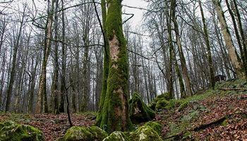 20هزار هکتار جنگل کاری جدید در زاگرس