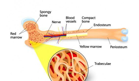 هر آنچه درباره پیوند مغز استخوان باید بدانید