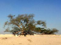 همه چیز درباره درخت زندگی بحرین +تصاویر