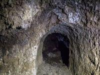 تصاویر عجیب از جویندگان «گنج» در یکی از جنگلهای مازندران