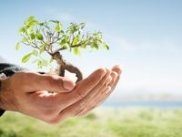 فرصت درختکاری را به تهدید تبدیل نکنیم/ درختان میوه بهترین انتخاب برای کاشت