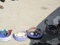 انهدام باند قاچاق مارهای سمی به خارج از کشور