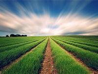رشد ۱۸.۳درصدی بودجه بخش کشاورزی در سال۹۷