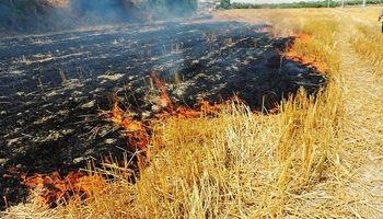 سه هکتار از مراتع تالاب هامون در آتش سوخت
