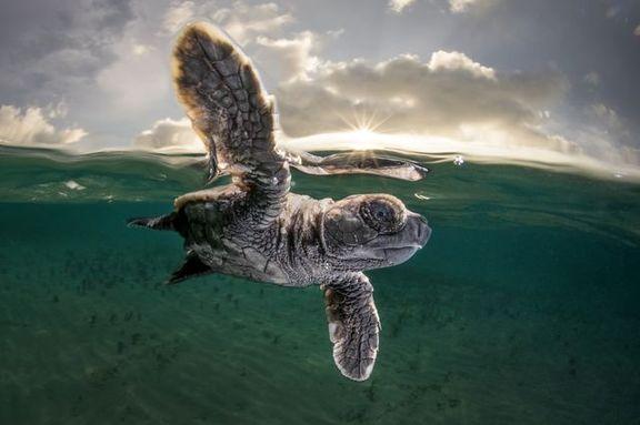 توقف بعد از تخریب ساحل خلیج فارس!
